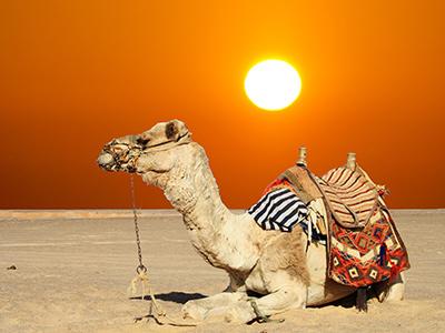 camel riding safari